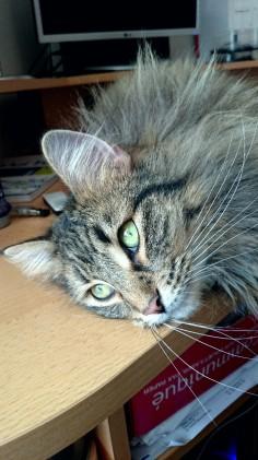 Olympia Kočky ze Sev