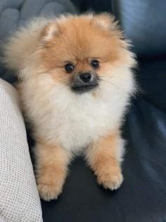 Harry, 9 měsíců